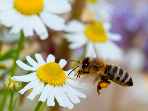 Bee here now… But for how long? The bees battle over pesticides continues