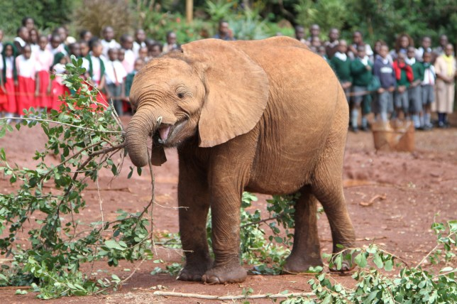 David Sheldrick Wildlife Trust elephant Tundani