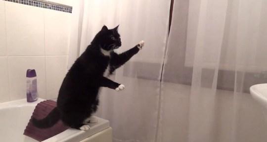 cat mirror video