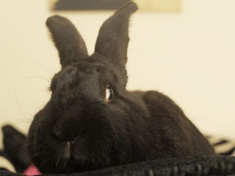 Top Pet Buys – How to prevent fly strike in rabbits
