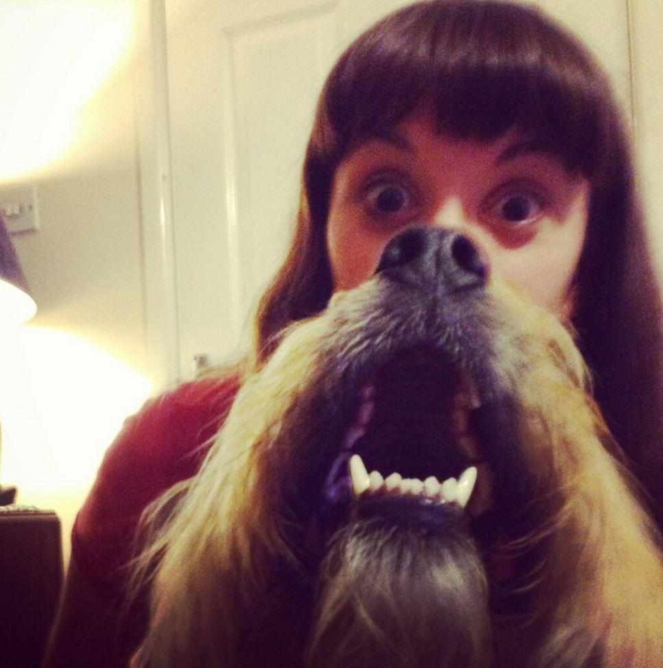 Dog beards: Canine owners fight back after cat beards take the web by storm