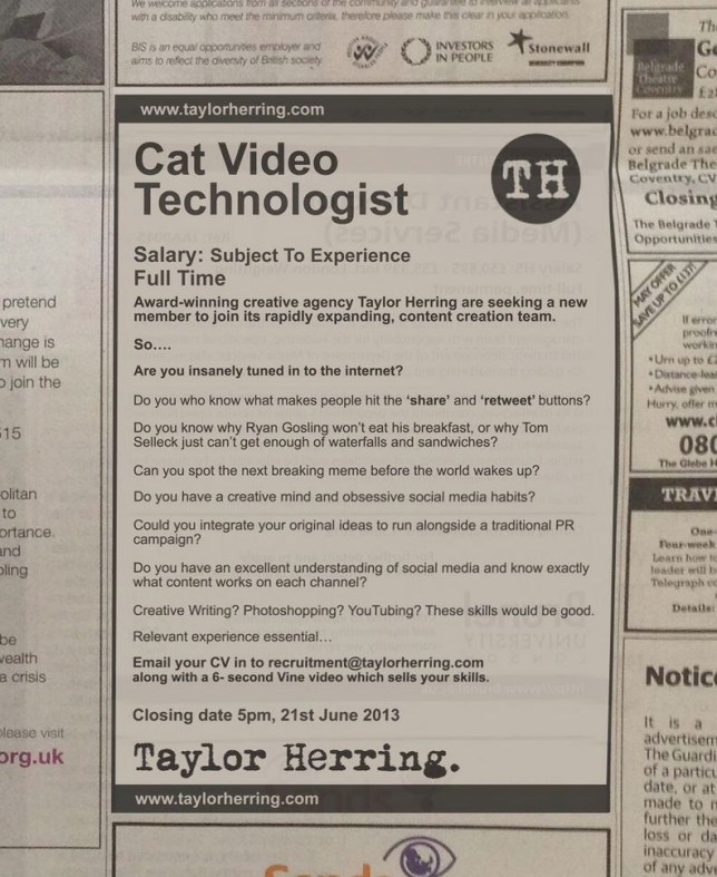 Love kittens and the internet? Apply to become a cat video technologist