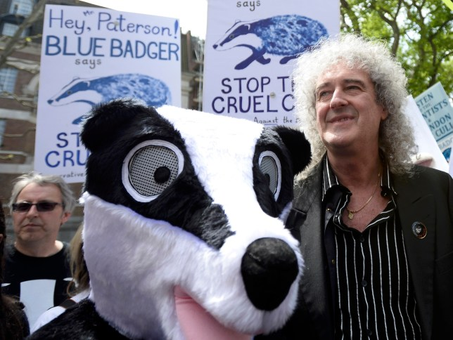 Brian May, guitarist of rock band Queen, leads a protest against the cull of badgers (Picture: Reuters)
