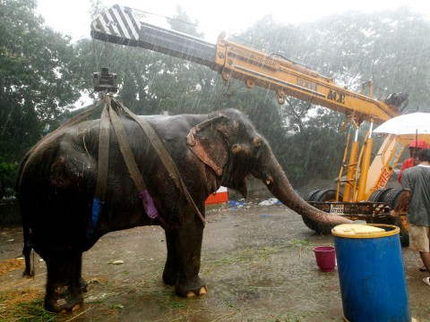Gallery: Bijlee the elephant rescued from Mumbai streets