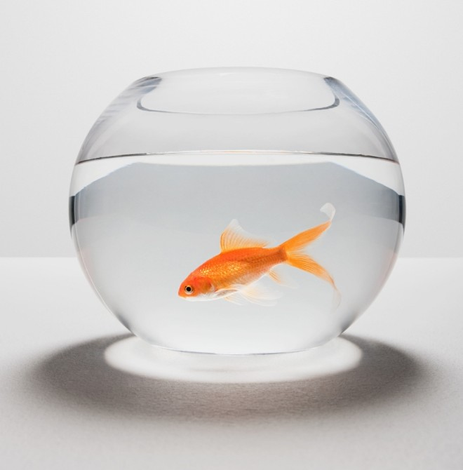 RSPCA warns anyone who ate a live goldfish for Neknomination will be prosecuted