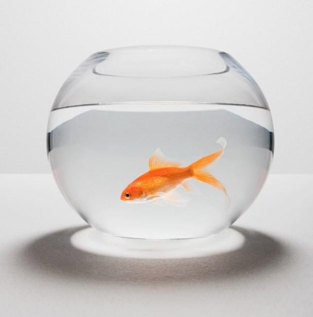 Nigel Ball, fish tank