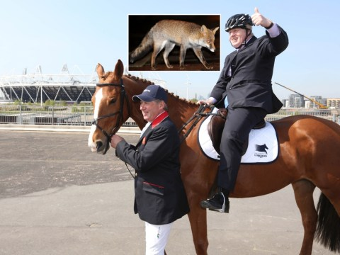 Boris Johnson calls for fox hunting in London to help keep numbers under control