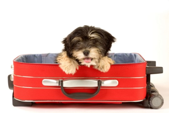 Taking your pet on holiday is easier than you think (Picture: Alamy)