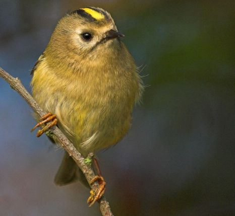 You can help save our birds simply by providing food