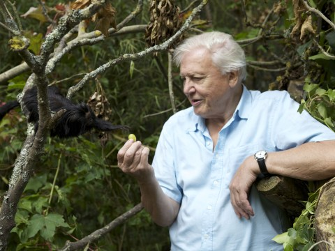 Brian May ft. Sir David Attenborough – 'Badger Swagger' on the way