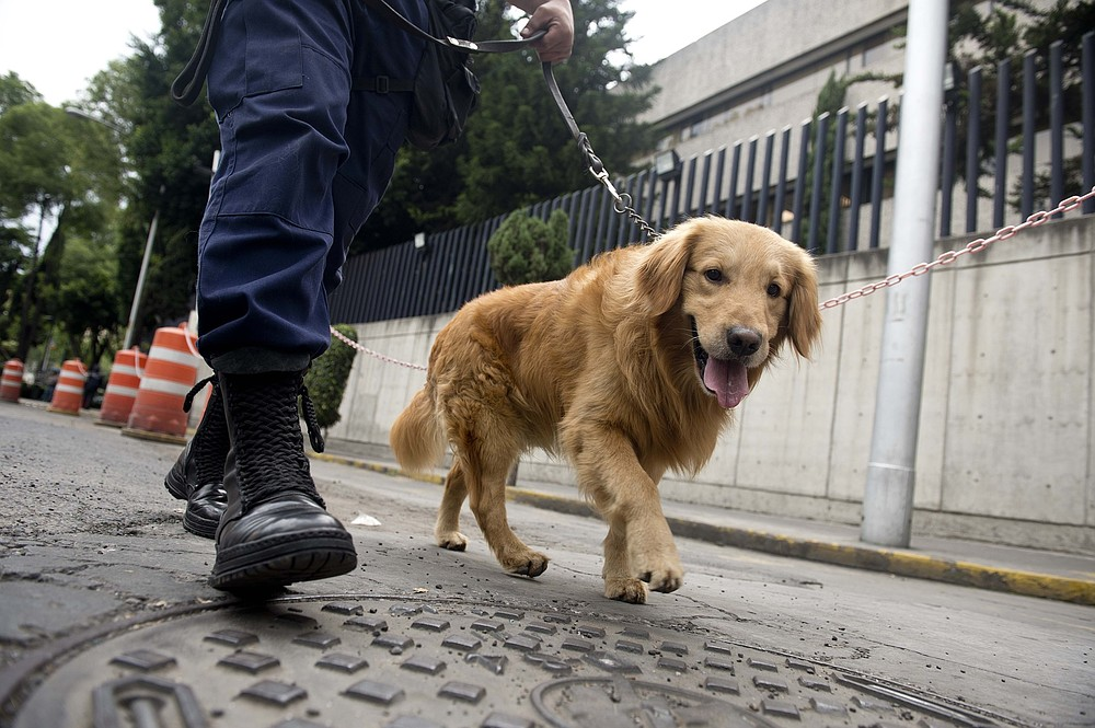 Parents offered hire of sniffer dog to check if their child is using drugs