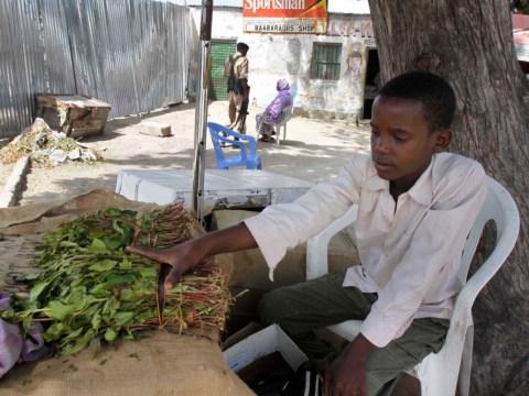 Khat: Britain bans herbal stimulant despite advisers' calls for rethink