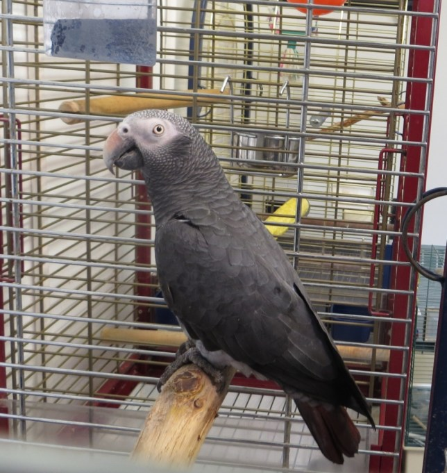 Scottish SPCA on quest to find owner of Sam the swearing parrot