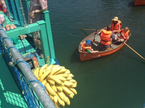 All aboard the banana boat: The Bompas and Parr Tutti Frutti experience at Kew Gardens