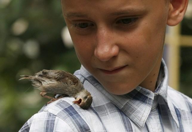 Free as a bird: One boy's heartwarming friendship with a baby sparrow