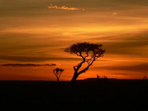 Travel to Richard Branson's luxury Maasai Mara safari for a uniquely wild experience