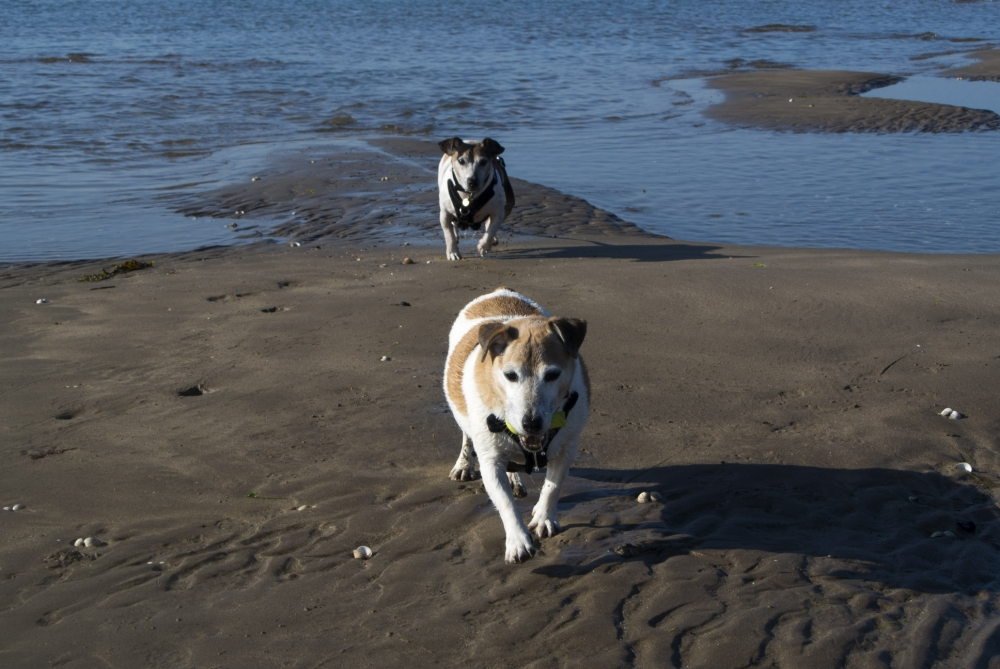 Pet blog: Why dogs should be allowed on beaches