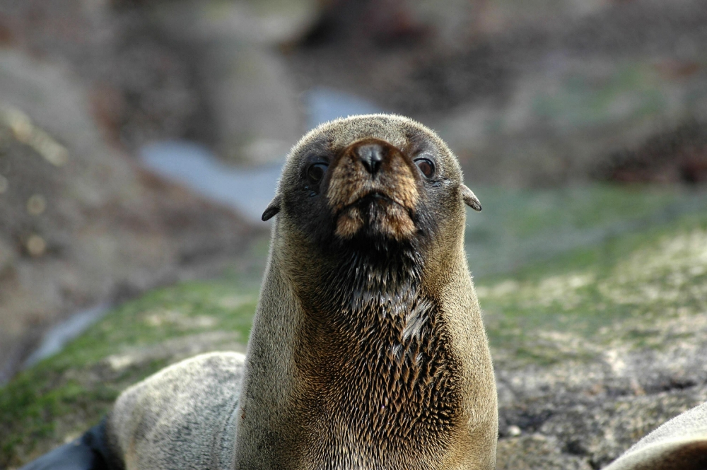 Zookeeper suspended for 'punching a seal'