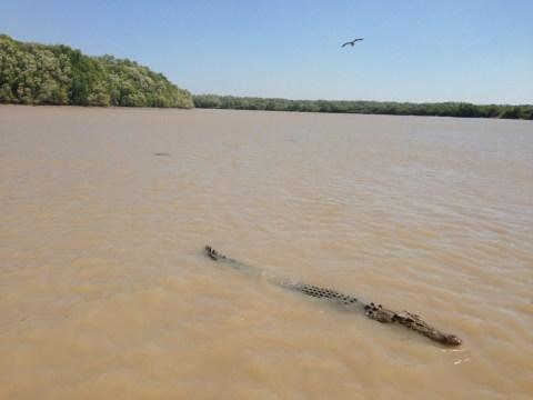 Mary River crocodile attack: Body of Sean Cole, 26, found in Australia's Northern Territory