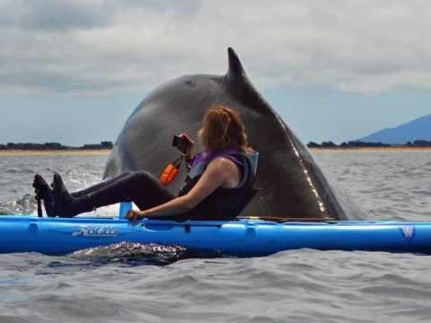 What a fin-tastic sight! Kayakers have a close encounter with whale
