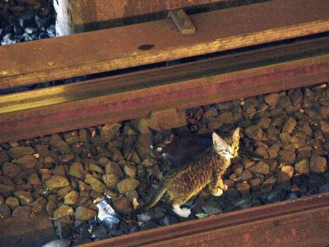 Kittens cause disruption to subway system after wandering onto tracks