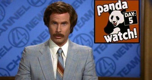 pandawatch