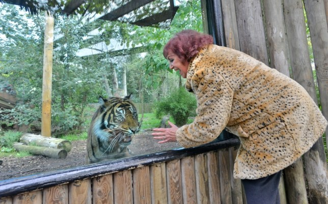 Too confusing for animals: Leopard print clothing banned at Chessington World of Adventures