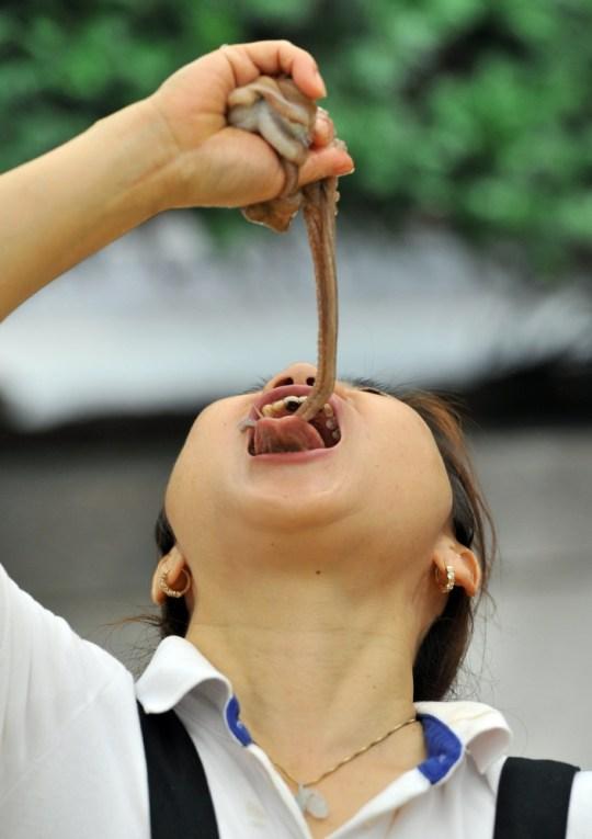 South Korea Festival Goers Tuck Into Live Octopus Metro News