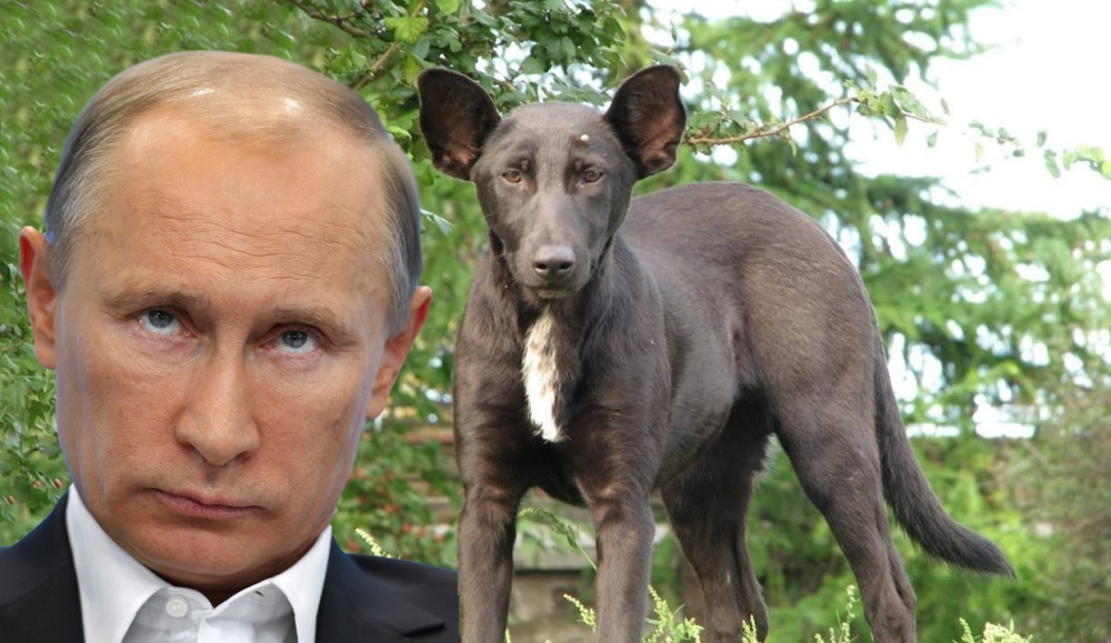 Dog looks like Vladimir Putin: Ukraine dog is spitting ...