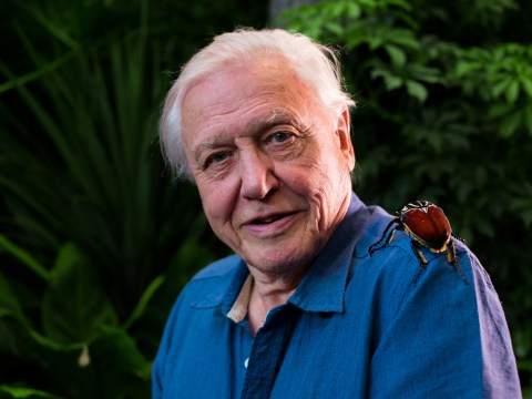 David Attenborough: I believe the Abominable Snowman is out there