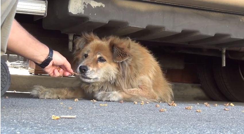 Eldad Hagar from Hopes For Paws tries to feed abandoned dog, Sonya (Picture:YouTube/Eldad Hagar)