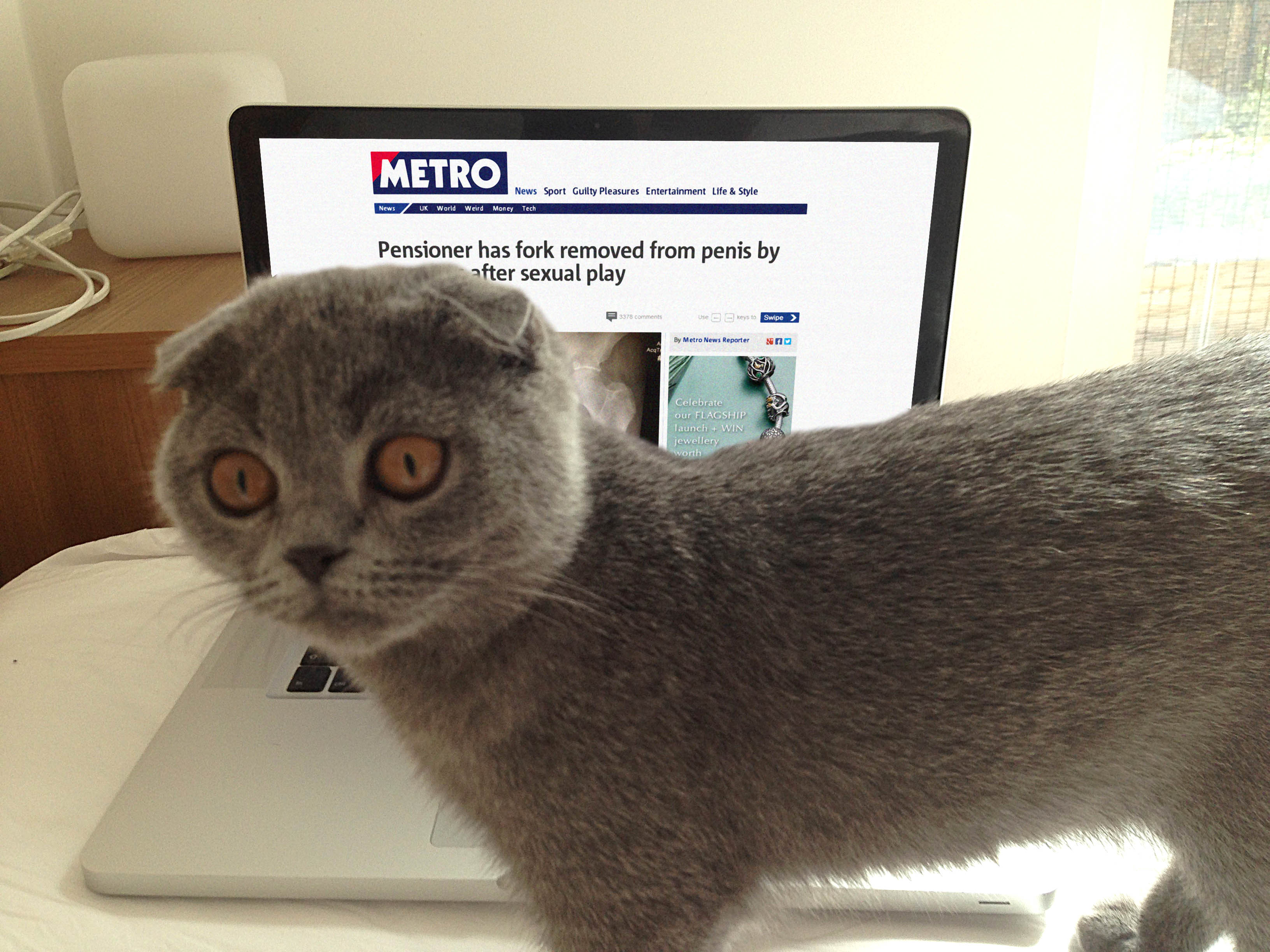 London's cutest cat update: How fame has changed Polly Ninan