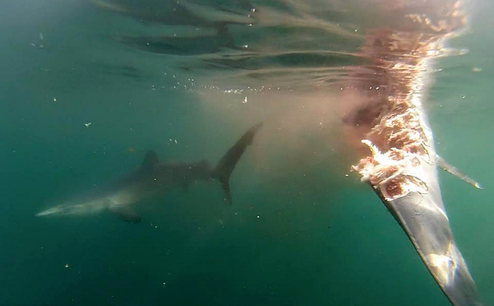 Gruesome shark attack in English Channel caught on camera