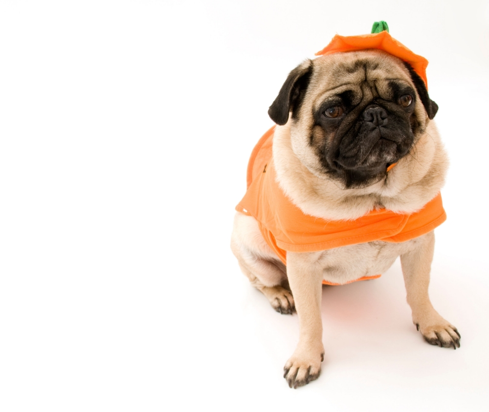 Halloween party theme ideas: Do something different this October 31st