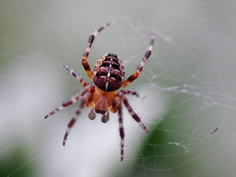 Learn to love the spider this Halloween, urges RSPCA