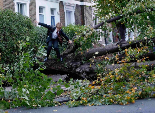 "Theo Harcourt, a 13-year-old student, jumps over a fallen tree as he makes his way to school in Islington, north London October 28, 2013, after strong storm winds and rain battered southern parts of England and Wales early on Monday, forcing flight cancellations, disrupting trains and closing roads and major bridges before the start of rush-hour. Local media dubbed the storm ""St. Jude"", after the patron saint of lost causes who is traditionally celebrated on October 28. REUTERS/Olivia Harris (BRITAIN - Tags: ENVIRONMENT DISASTER TPX IMAGES OF THE DAY)"