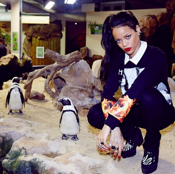 Bemused: A pair of penguins seem oblivious to the allure of Rihanna (Picture: Rihanna Instagram)