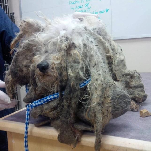 Meet Shrek: Dog abandoned in Burford woods on the mend