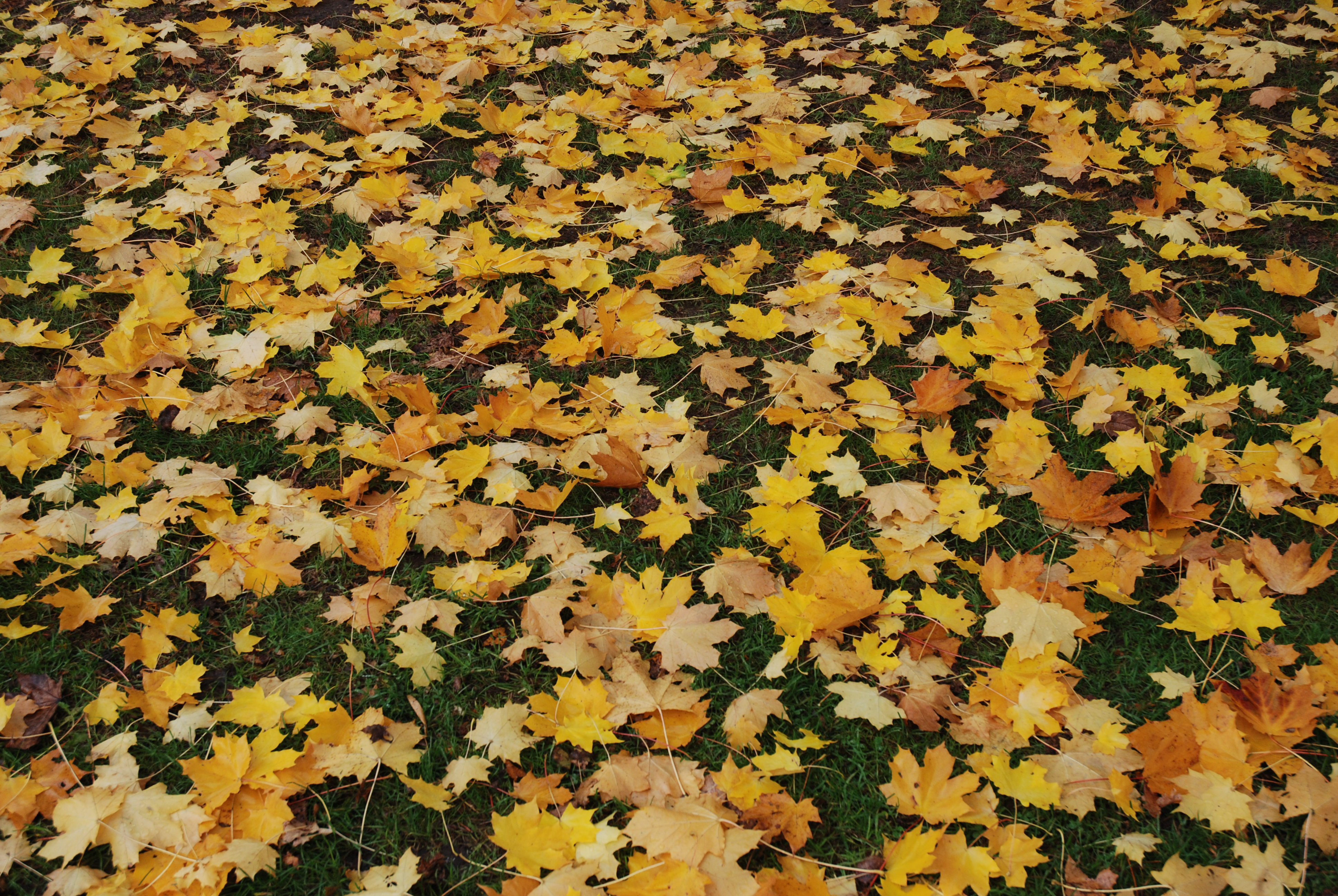 Preparing your garden for winter: Five things to do this month
