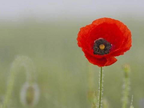 Why Remembrance Sunday matters