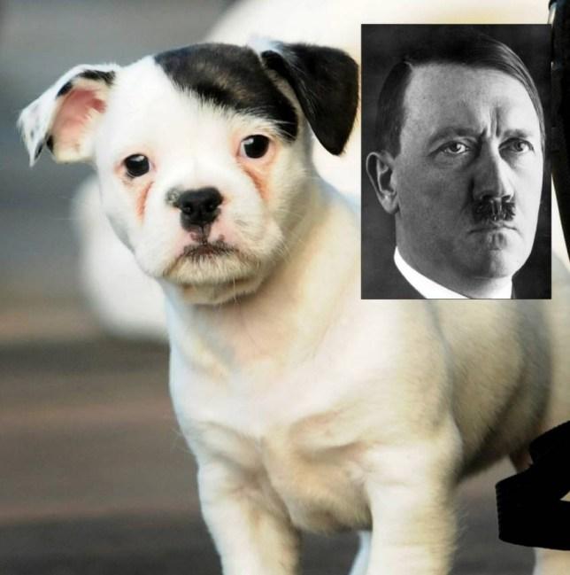 Adolf Hitler, puppy