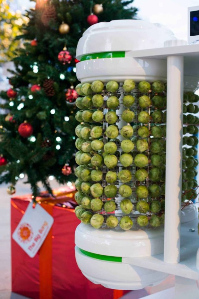 Brussels sprouts used to power Christmas tree lights