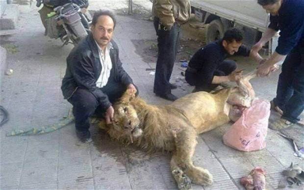 Starving Syrian rebels 'take lion from Damascus zoo to eat'