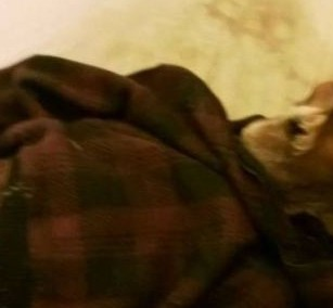 Warning graphic images: Woman sleeps next to husband's corpse for a year