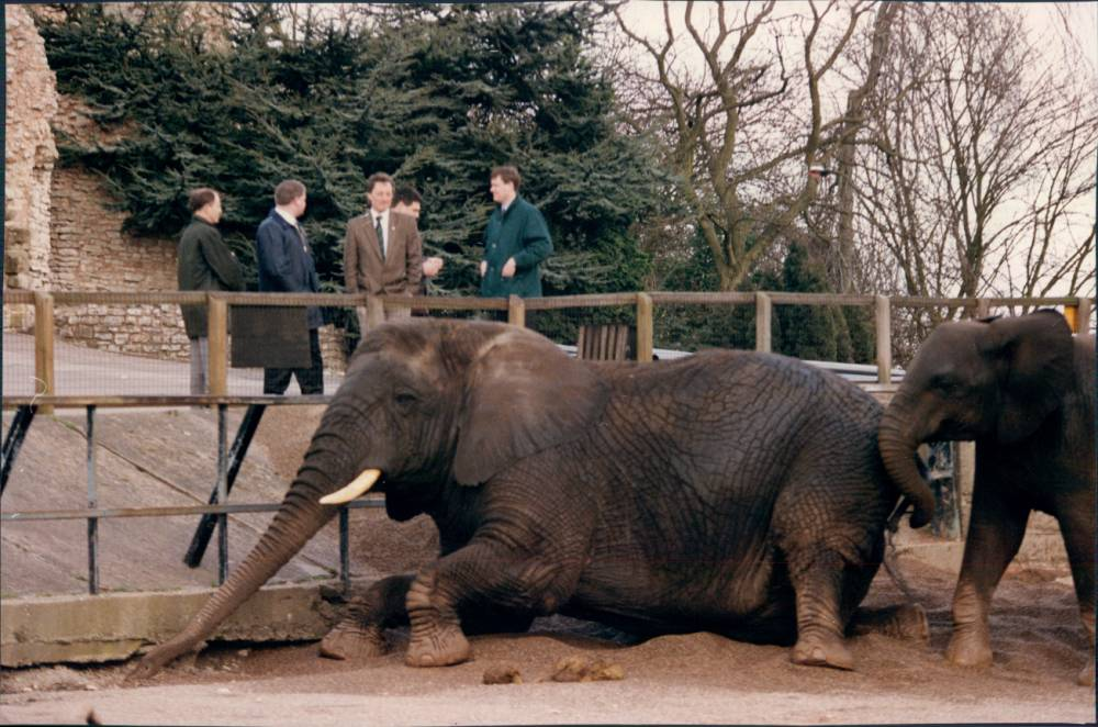 Timeshift: A Day At The Zoo explored the evolution of such institutions (Picture: supplied)
