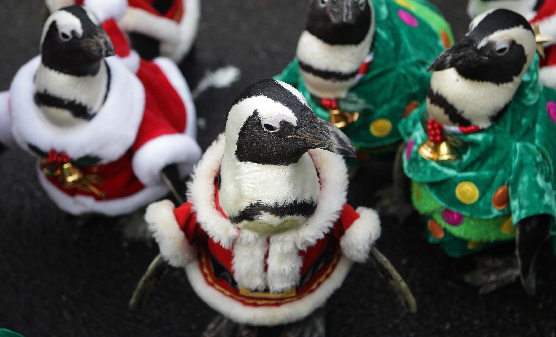 Gallery: Penguins dress as Santa Claus at Everland