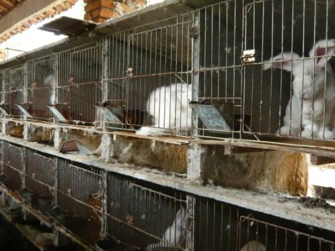 Clothing brands agree to stop selling 'cruel' angora wool after graphic videos showing its manufacturing process surface