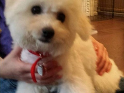 George Osborne unveils government's latest Downing Street lapdog – a puppy called Lola