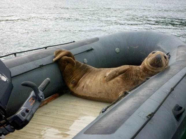 Eddie Stebbings: Newlyweds stranded on Skomer Island after bull seal hijacks their dinghy