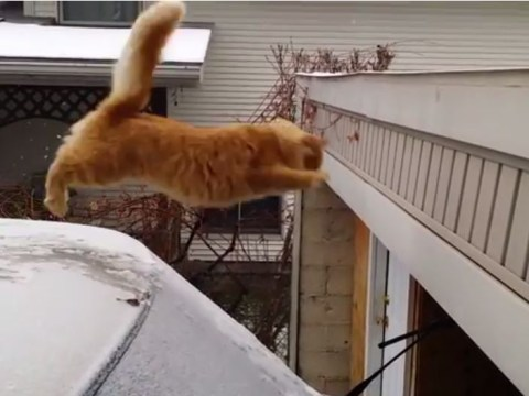 Waffles the cat tries to jump on to snowy roof – fails, obviously